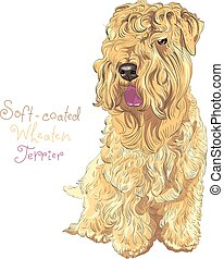 Soft-coated Wheaten Terrier dog