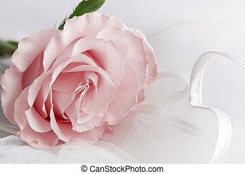 Soft color Rose on a light background