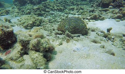 Soft Coral and Other Wild Sea Life in Thailand - Soft coral...