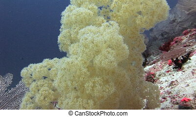Soft coral on background sea bottom underwater in Maldives.