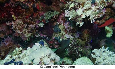 Soft coral polyps on coral reef Elfin Ston catch plankton, Red Sea, Egypt 4K
