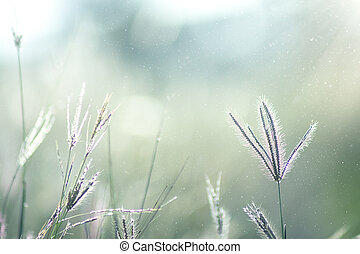 Soft flower grass with floating light and blur background.