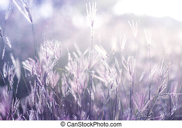 Soft flower grass with light and blur background.