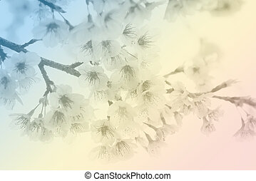 Soft focus Cherry Blossom or Sakura flower on pastel tone style background