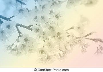 Soft focus Cherry Blossom or Sakura flower on pastel tone style background