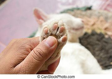 Soft focus Feet of cat.