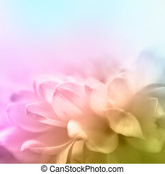 Soft focus flower background with copy space. Made wth...