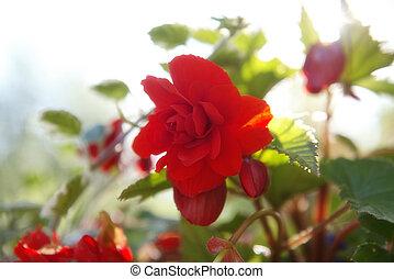 Soft focus flowers