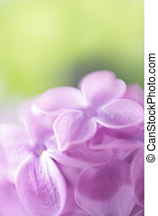 Soft focus lilac flower background. Made with lens-baby and ...