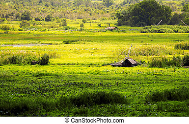 Meadow and cottage