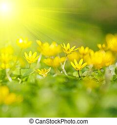 soft-focus, närbild, av, gul blommar