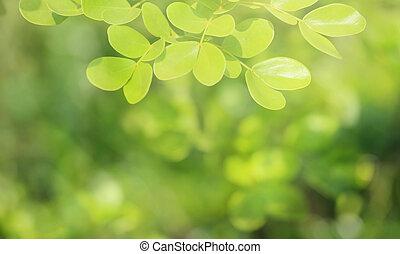 Soft focus natural green background.