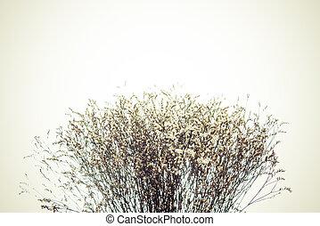 Soft focus ,Vintage flower