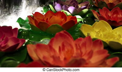 Soft focused decorative colorful water lilies floating on...