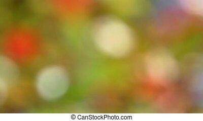 Soft focused leaves background