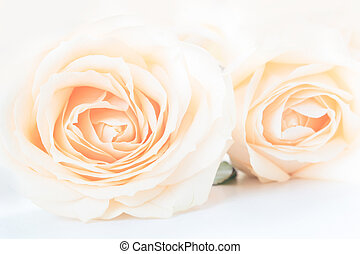 Soft full blown delicate roses as a neutral background. Close up.