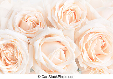 Soft full blown delicate roses as a neutral background. Selective focus.