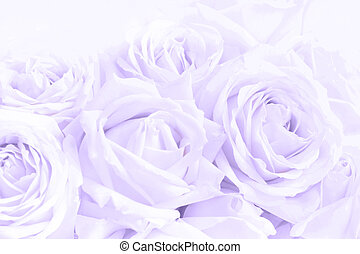 Soft full blown delicate roses as neutral background. ...