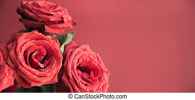 Soft full blown red roses as background. Space for text. ...
