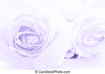 Soft full blown ultraviolet roses as a neutral background. ...