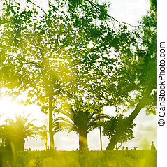 Soft green abstract nature background.