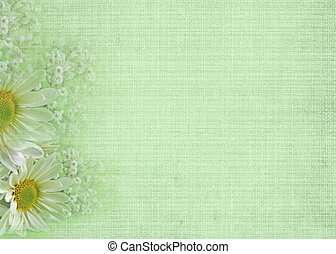 Soft Green - Pretty daisies border on green texture.