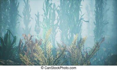 soft-hard, sous-marin, coraux, exotique, marine, coloré