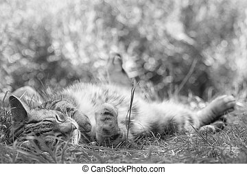 soft kitty relaxing in grass