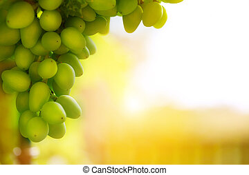soft light on bunch of grapes