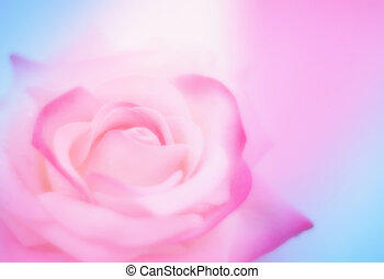 soft pink blue blurred background with rose