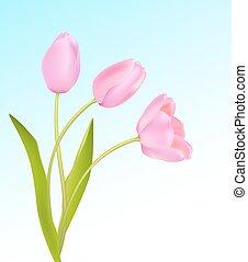 Soft pink tulips on light blue sky spring background. Vector