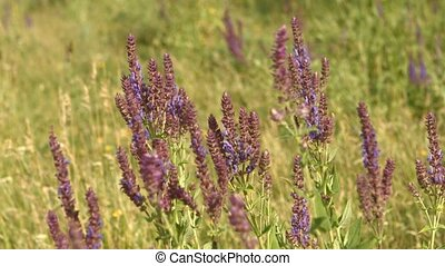 Soft Purple Flowers With Bee