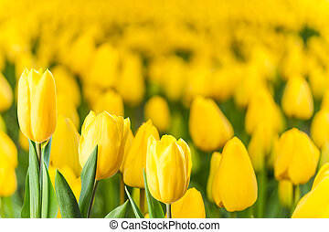 Soft Spring Floral Background