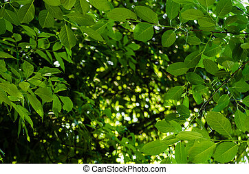 Soft sun light through the foliage of the trees in soft selective focus against background of blurry foliage and blue sky. Close up branch of tree with brightly green leaves. Place for your text