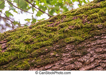 Soft thick moss in the forest on fallen tree trunk