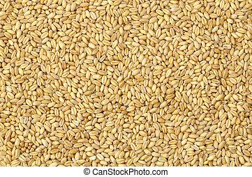 Soft wheat background