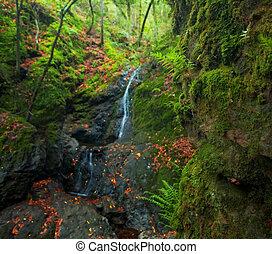 sognante, foresta pioggia, waterfall., fuoco, è, su, appresso, felci, e, moss.