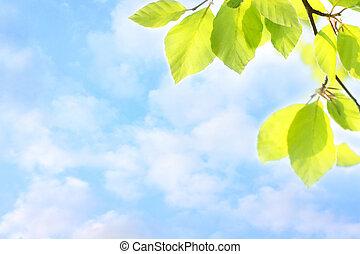 sognante, primavera, foglie, cielo, grean