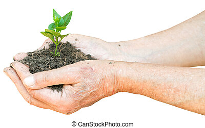 soil and green sprout in male hands