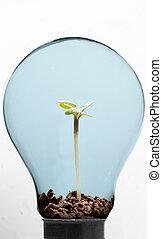 Soil and plant inside light bulb