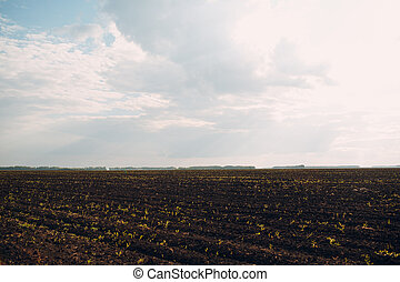 Soil of an agricultural field. Black earth and sky.