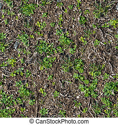 Soil with the Sprouted Grass Texture Seamless. - Soil with...