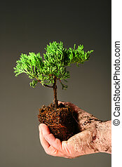 Soiled hand holding a small tree against dark background