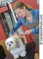 soins personnels, salon, brossé, chien, obtenir
