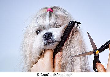 soins personnels, tzu, shih, chien