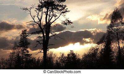 soir, ciel, arbres