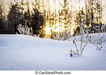 soir, coucher soleil, hiver