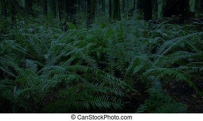 soir, dépassement, forêt, fougères, tard