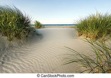 soir, dunes, doux, light., marram, sable, coucher soleil,...