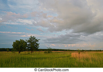 soir, field.